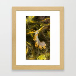Stearns' Aeolid in a Bed of Brittle Stars Framed Art Print