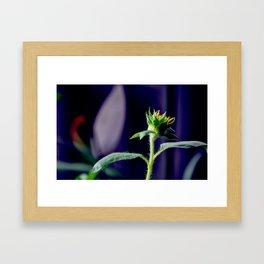 Pot Botany at the Laurels 2 Framed Art Print