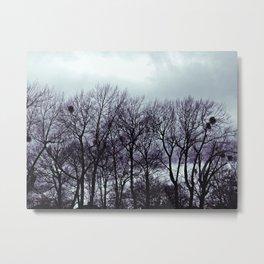 Birds Nest ii Metal Print