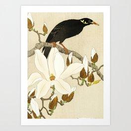 Bird Myna sitting on Magnolia tree - Vintage Japanese Woodblock Print Art Print