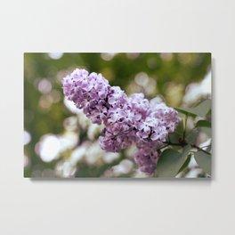 Sunny Lilac Metal Print