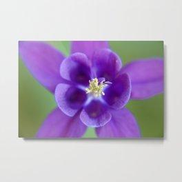 Fluid Nature - Purple Aquilegia Flower Metal Print
