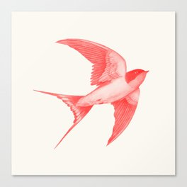 Barn Swallow (red) Canvas Print