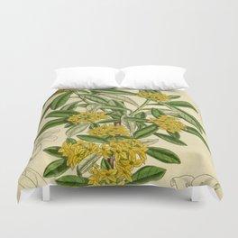 Daphne giraldii, Thymelaeaceae Duvet Cover