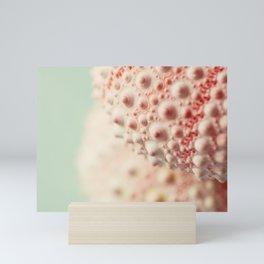 sea urchin series no 3 Mini Art Print