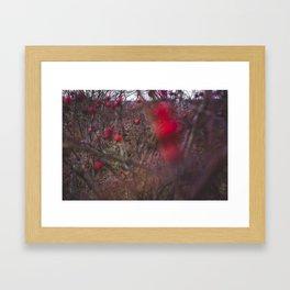 Red Autumn Framed Art Print
