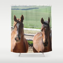 Horse Friends Photography Print Shower Curtain