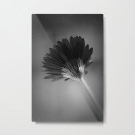 Gerbera III Metal Print