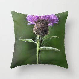Common Knapweed 1 Throw Pillow