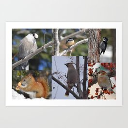 Boreal Wildlife Art Print