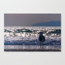 Afternoon Seagull Canvas Print