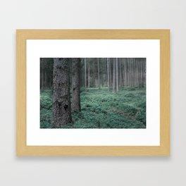 Mist in the Forest Framed Art Print