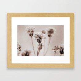 Cirsium 4009 Framed Art Print