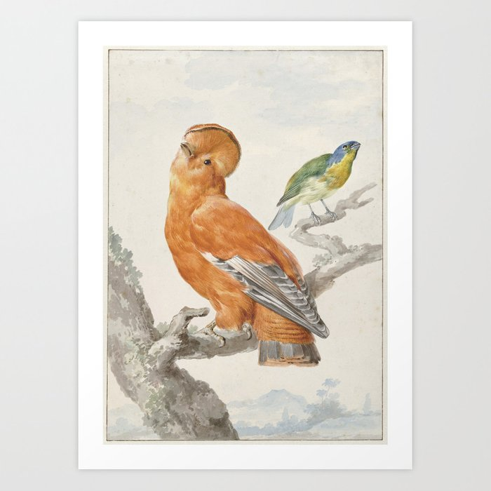 Two Exotic Birds - Vintage Tropical Decor Art Print by fineearthprints