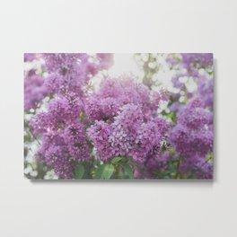 Dreamy Spring Lilacs Metal Print