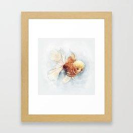 Oranda Goldfish Framed Art Print