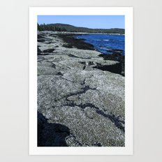 Barnacle Rocks at Acadia Art Print