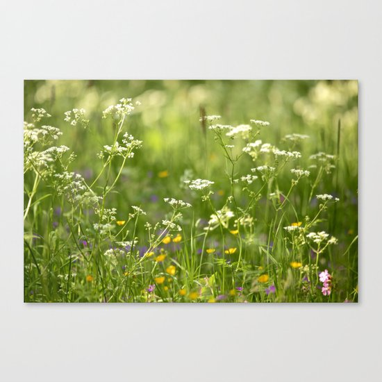 Green Summer Meadow  Canvas Print