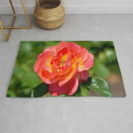 Pink Double Knock Out Rose Rug