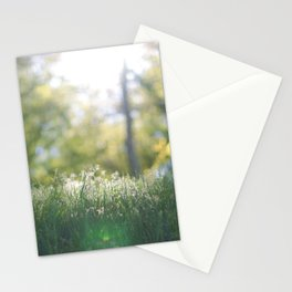 Grass in sunshine Stationery Cards