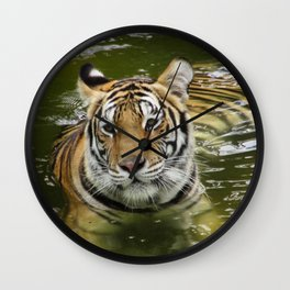 Tiger in the Water Wall Clock