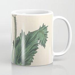 Caraway (Carum carui)  from Medical Botany (1836) by John Stephenson and James Morss Churchill Coffee Mug