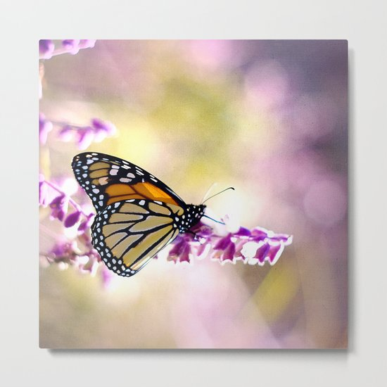 Monarch Softness Metal Print