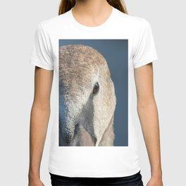 Juvenile brown swan portrait close up, Mute swan (Cygnus olor) T-shirt