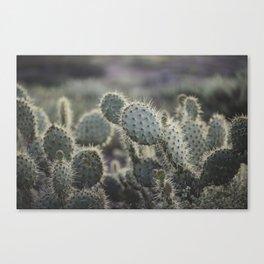 Sunset Cliffs Cactus Canvas Print