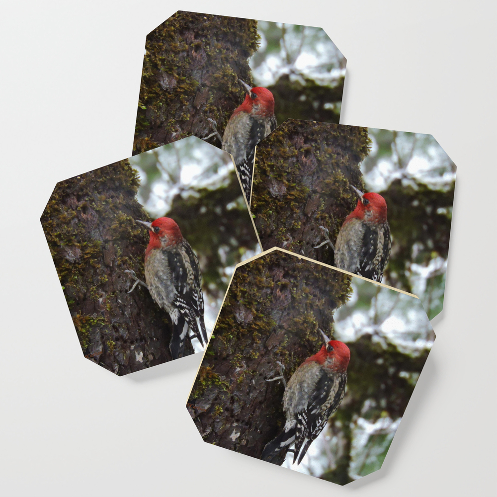 Red-Breasted Sapsucker in Christmas Snow Coasters by rscarlson (S6C4016012) photo