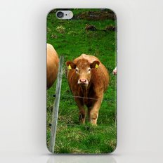 Cows on the field iPhone & iPod Skin