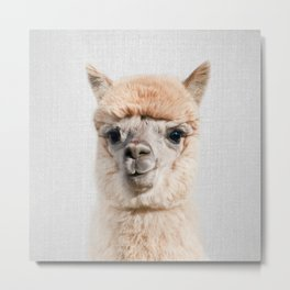 Alpaca - Colorful Metal Print