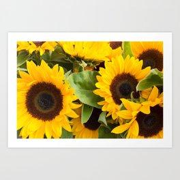 Fall Sunflowers Art Print