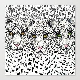 THREE SNOW LEOPARDS Canvas Print