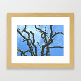 High Dynamic Range Tree Framed Art Print