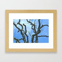 High Dynamic Range Tree Framed Art Print