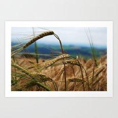 summer hay Art Print