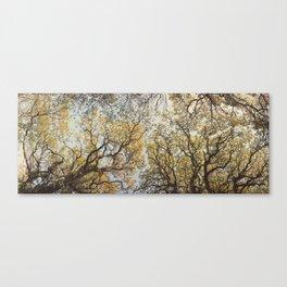Yella Trees ∆ Canvas Print