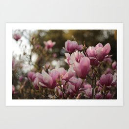 Pretty and sweet pink flowers Art Print
