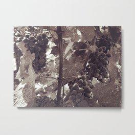 Napa Grapevine Noir Metal Print