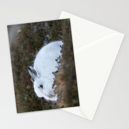 Close to wild mountain rabbit Stationery Cards