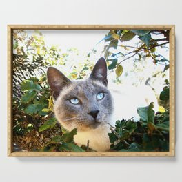 Siamese Cat in Tree Serving Tray
