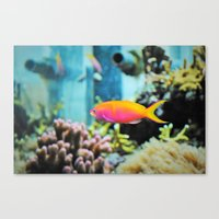 the life aquatic Canvas Prints featuring Life Aquatic by aes·thete