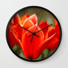 Tulips in spring Wall Clock