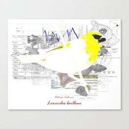 Natura Technica - Palila Hawaiian Songbird Canvas Print