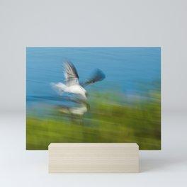 Black skimmer (Rynchops niger) Mini Art Print