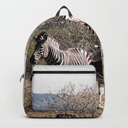 Wild Zebras Herd Kruger National Park, South Africa Backpack