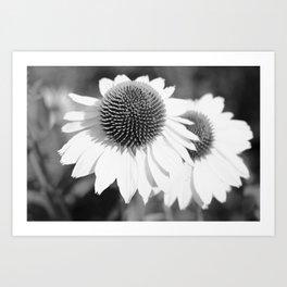 Echinacea Twins Art Print