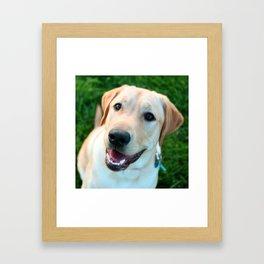 Obi Framed Art Print