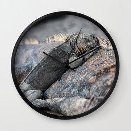 Galapagos baby marine iguana Wall Clock